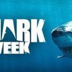 Saba's Shark Strong Week